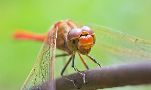 微距镜头下,大自然焕发生机,你拍过这些吗?