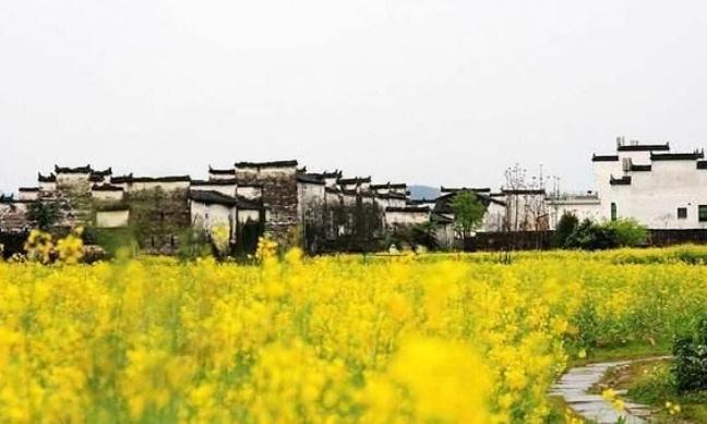 江西婺源:种油菜种出了名堂,三月来体验梯田开花的辉煌景观