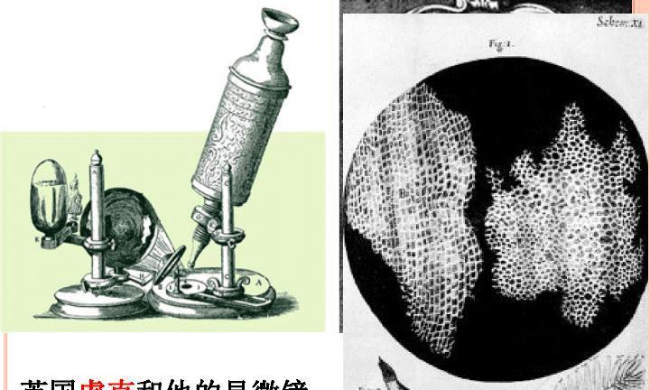 用放大多少倍的显微镜才能看到亚原子粒子?