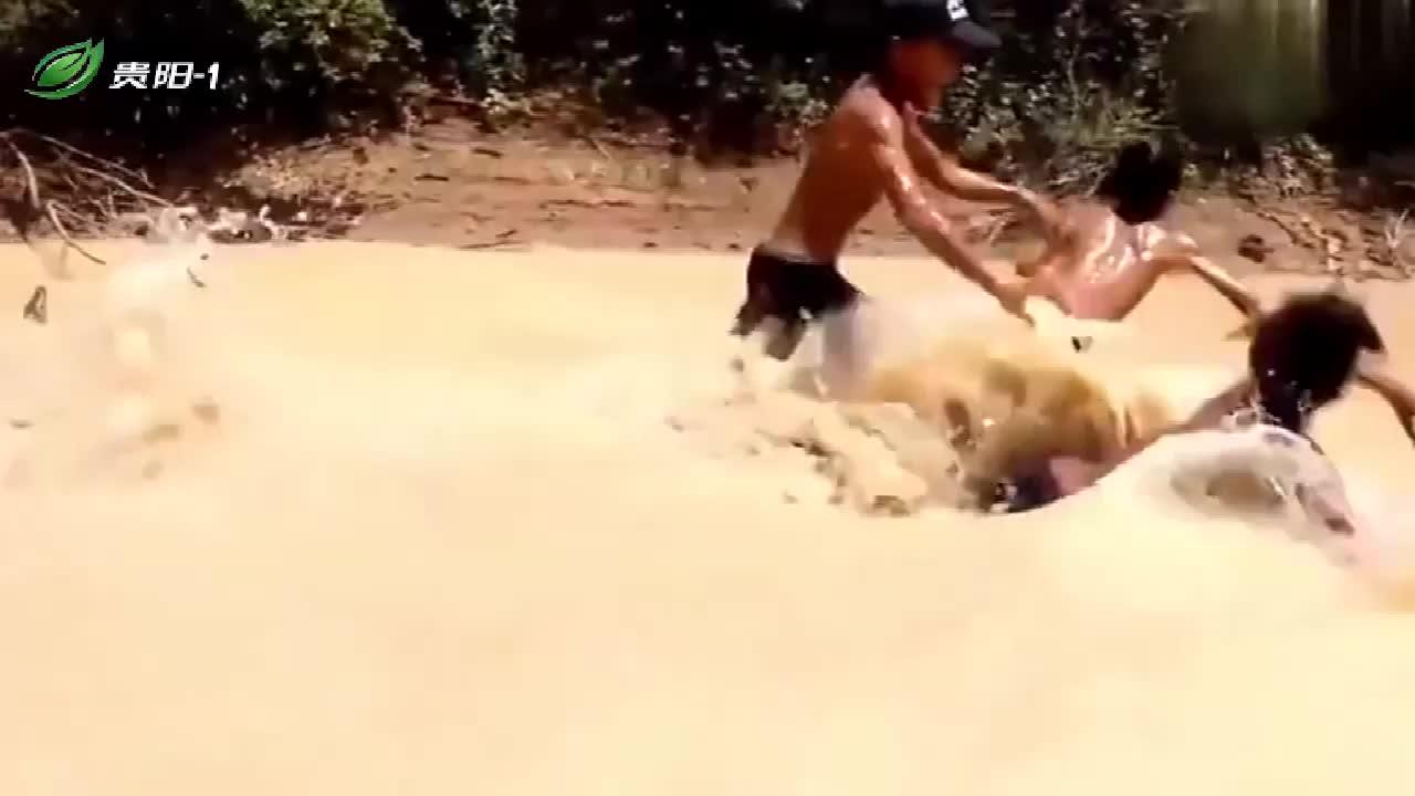 这三个小孩胆真大!浑水中抓四米多的巨蟒,不要命!