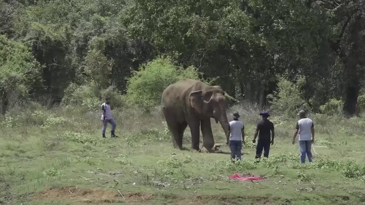 大象腿上肿起巨包,被人类救助后,感激的留下了眼泪