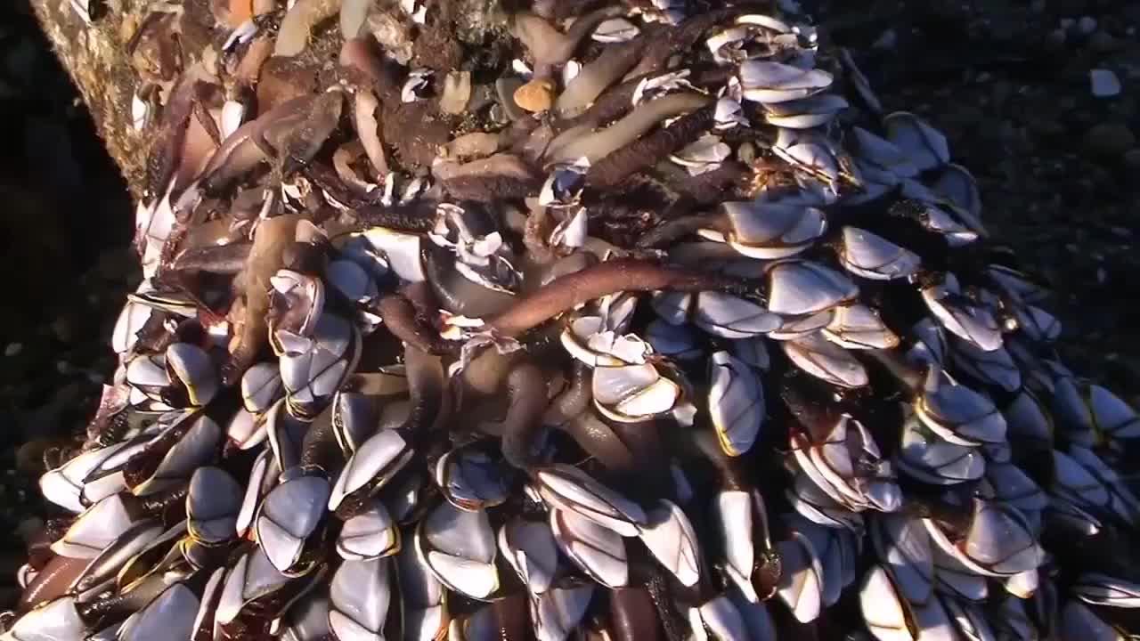 """海滩冲上根""""烂木头"""",游客全都被吓走了,老渔民却表示发财了!"""