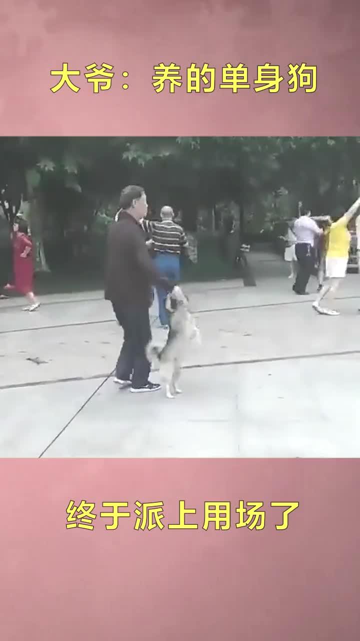 大爷-不就是少了一个女伴,养的狗子照样派上用场