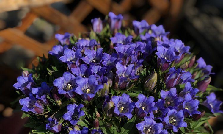 """此花被誉为""""植物活化石"""",生命力顽强,寓意着着恋上不快乐得你"""