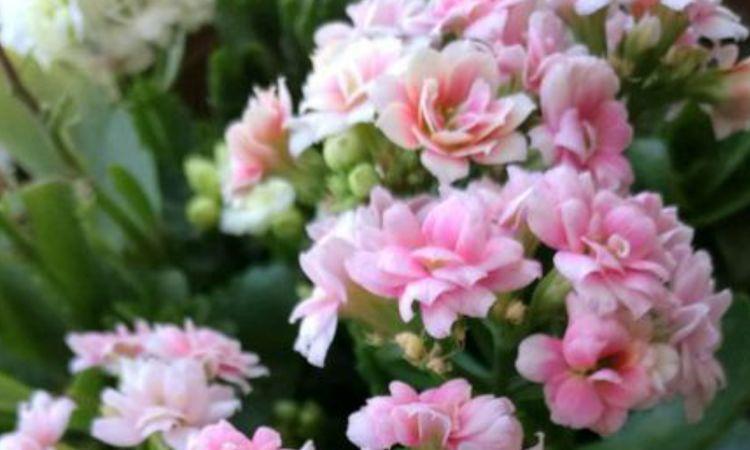 三种花秋凉了要苏醒,做好秋季养护,早早孕蕾开花,花繁叶茂