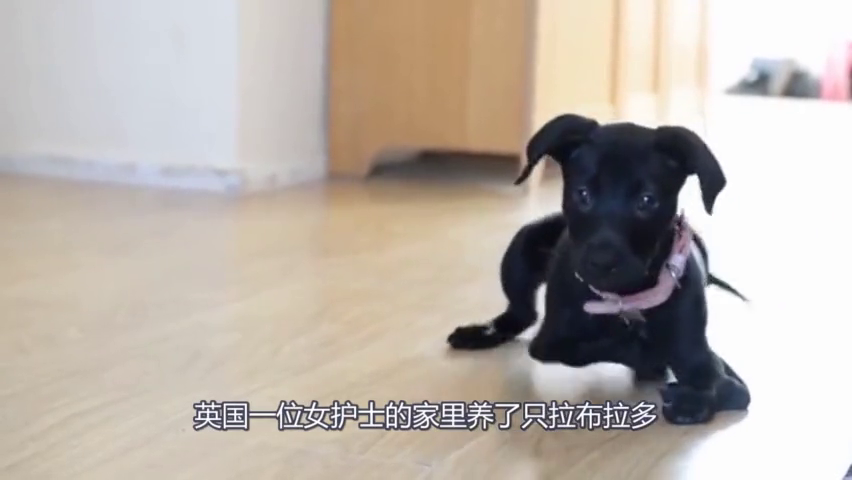 六条腿的狗狗差点被安乐死,被救下后,竟发生如此可怕的事