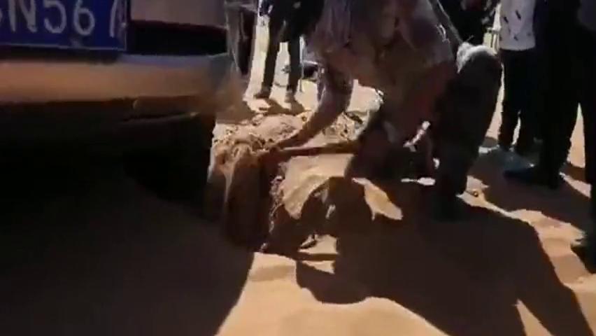阿拉善沙漠群英会,看一汽丰田普拉多谢幕风采!真过瘾!