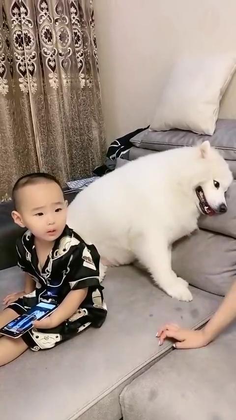 狗比我还爱儿子!我教育儿子几句,狗子就非得拦着我!