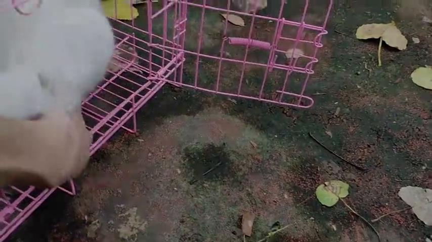 流浪猫被骗进笼子后一脸懵逼地望着我,就差开口问候我祖宗了