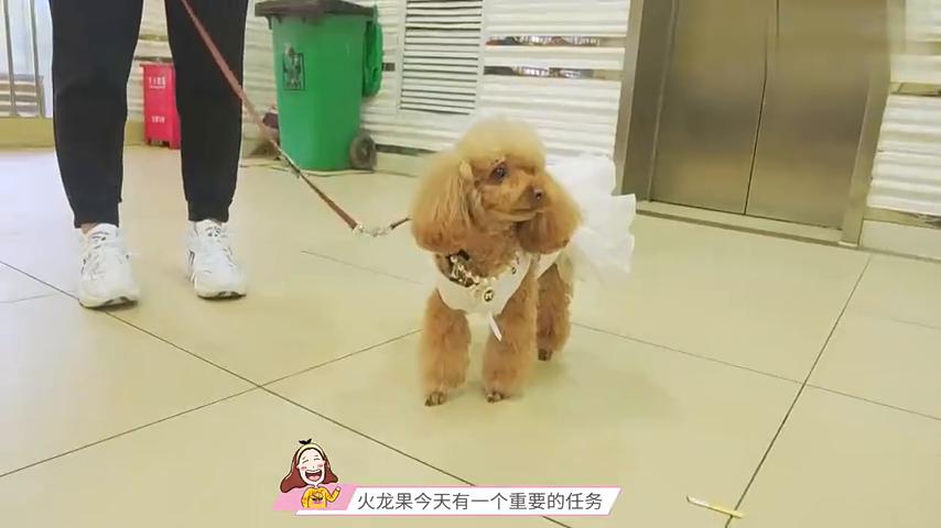 一群小朋友为何围着一只泰迪画画?没想到狗狗当小模特这么敬业!