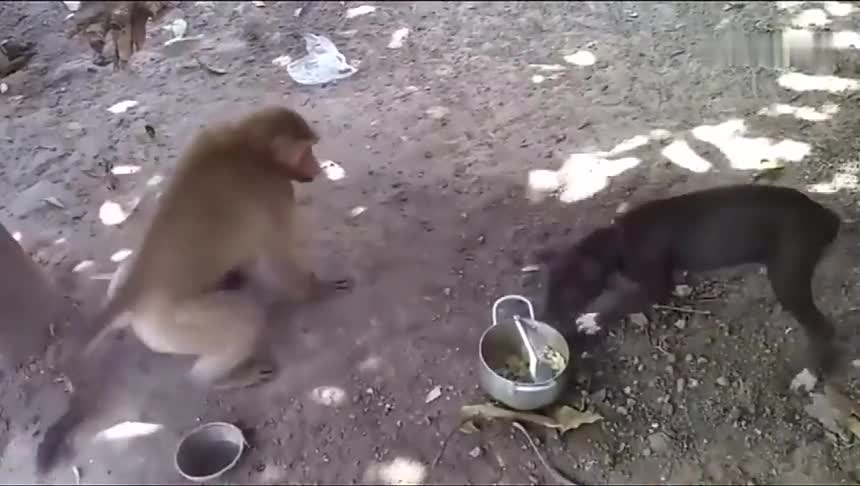 猴子太调皮了,变着花样欺负狗狗,网友:真担心狗狗被气坏