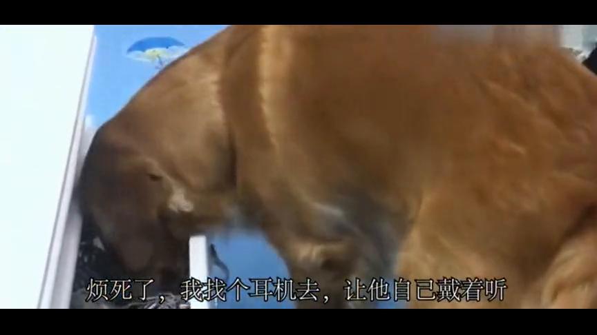 主人在听歌曲,狗狗的做法太逗了,这是要吵死狗吗?