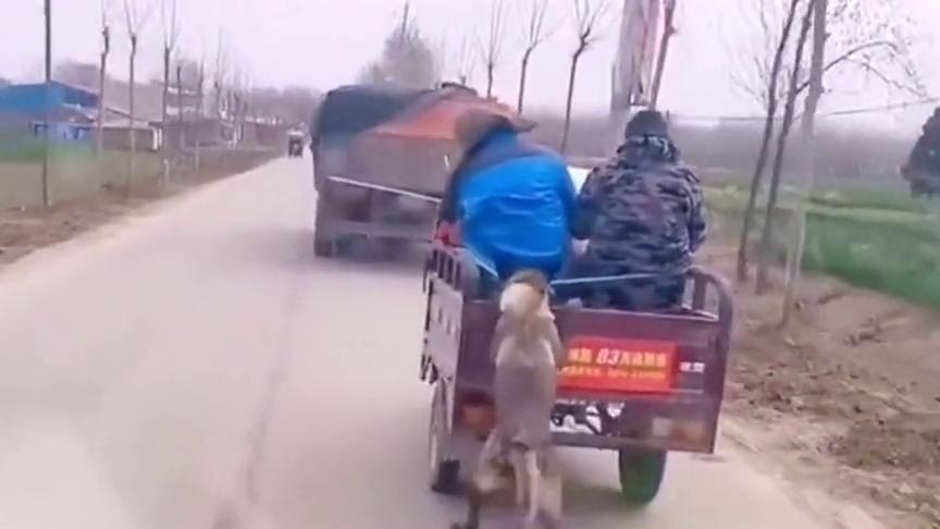 前面车上没有座位了,狗子只能买了个挂票,看起来好厉害的样子!