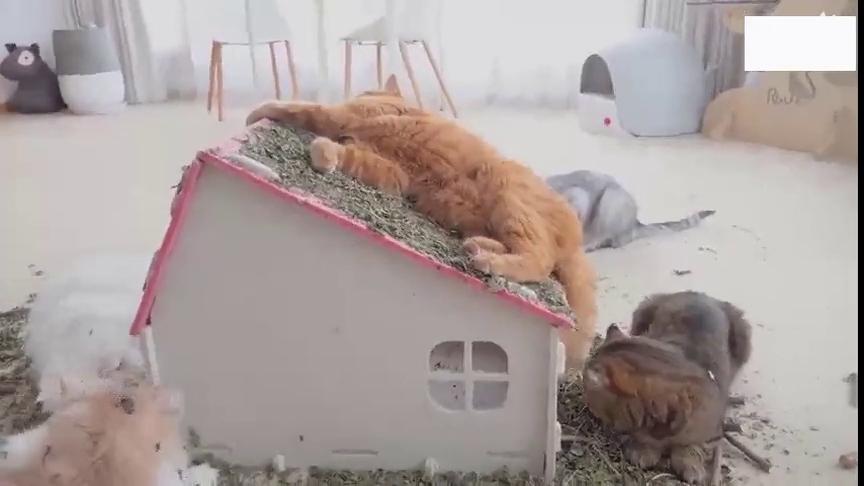 可爱小动物:小花猫们在一起开派对,哈哈