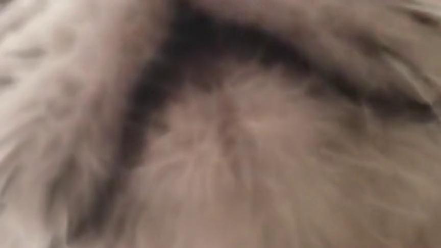 这猫咪的叫声也太可爱了吧,隔着屏幕都萌一脸,好想养一只