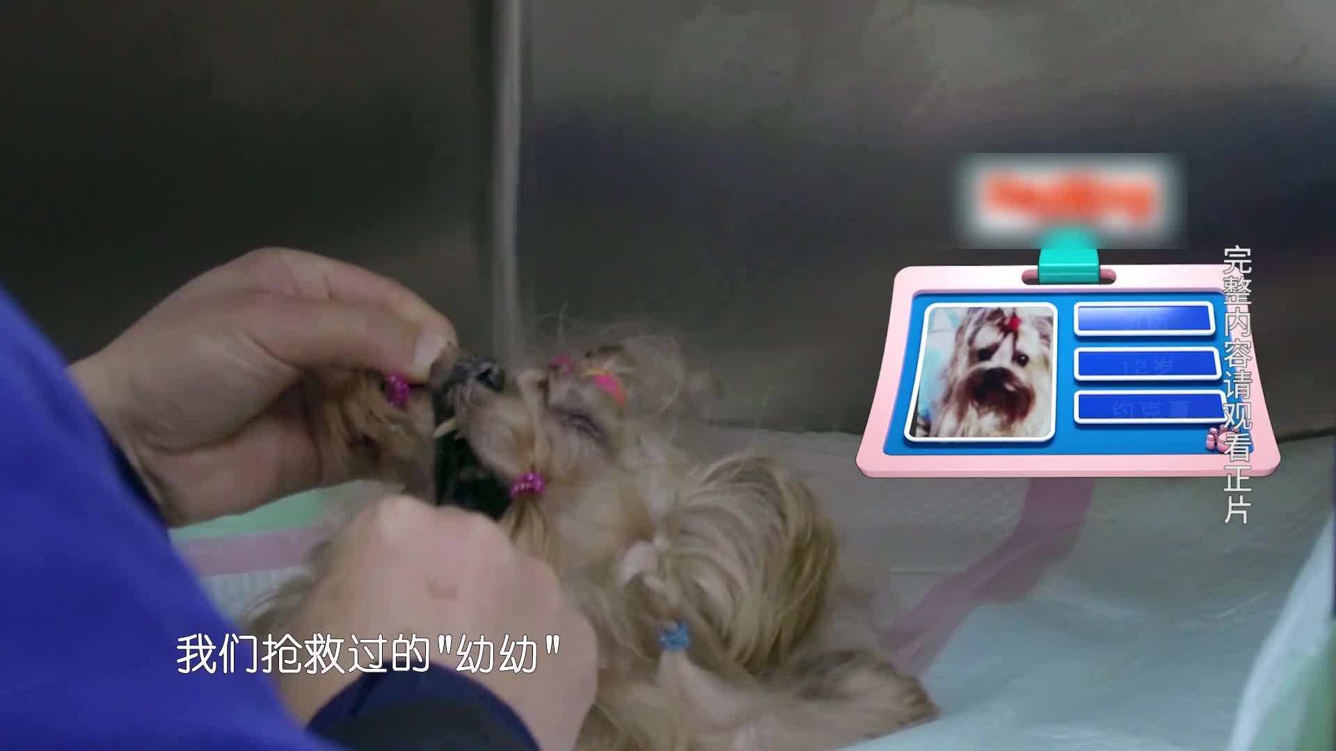 【小主安康-宠物医院2】狗狗深夜离世