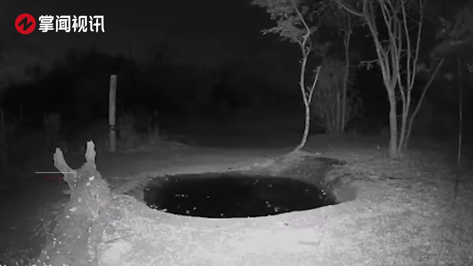 豹子在水坑边喝水感到有东西接近自己 立马吓得跳起2米高