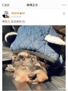 蔡徐坤晒爱犬照片,为它庆生
