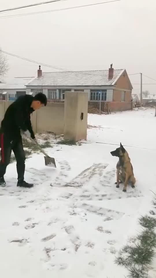 主人干活,狗狗的反应