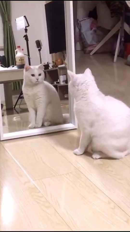 同款猫咪看镜子,是不是一样的!
