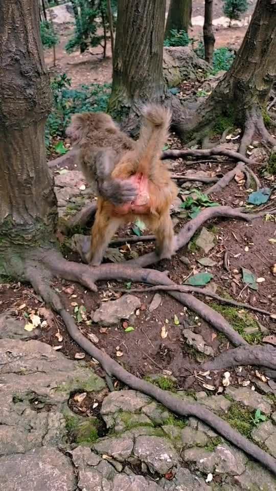 它是我见过最调皮的小猴子了!不过还挺可爱的