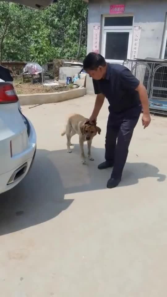 狗子回了山村,不愿再回城里了,这是为什么?