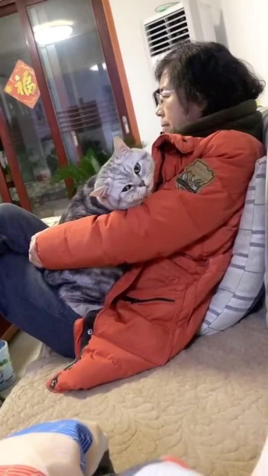 你只需要把猫带回家,剩下交给它搞定