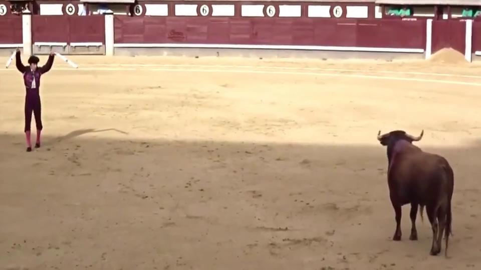 西班牙斗牛上演意外一幕,公牛出场直接自杀,场面一度尴尬