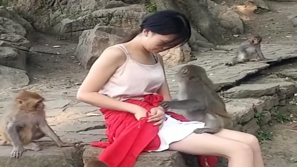 猴子的审美观和人类差不多啊,也知道什么样的女人漂亮!