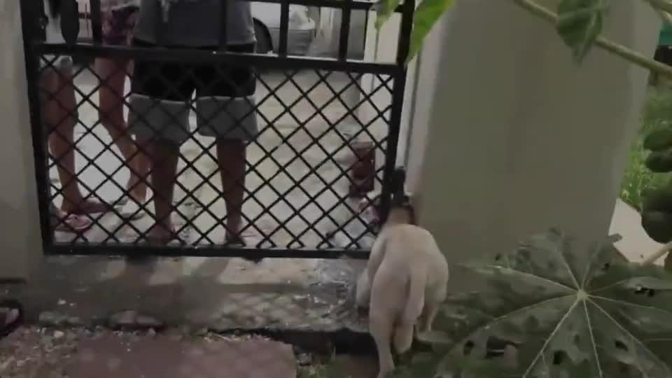 狗狗想从门缝钻进家里,结果被卡得死死的,这下尴尬了