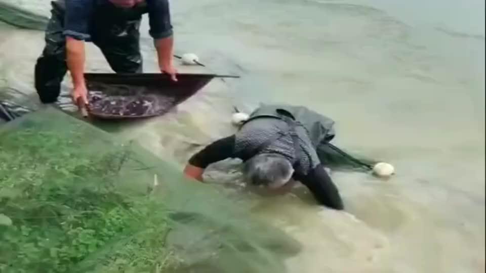 村长家的鱼塘清塘了,最后一条大青鱼也被抓上来了,这回赚大了