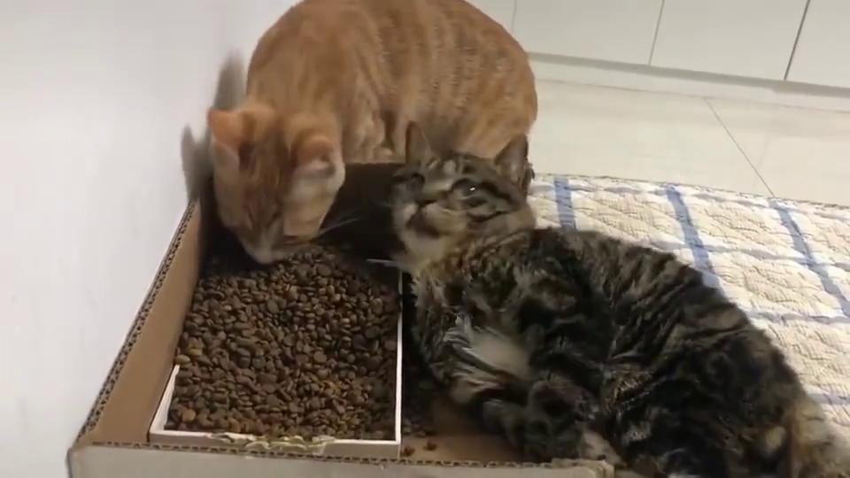 猫:我今天癫痫病犯了,兄弟你先吃,记得给我留点!