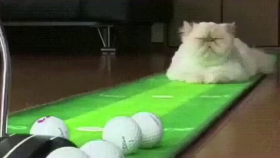 猫咪:女人就是事多,还要天天陪练高尔夫球