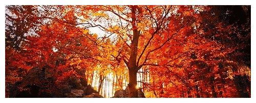 清凉谷的晚秋太迷人,玻璃栈道、水晶长城免费体验!