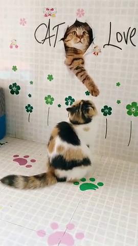 自从家里贴上这个墙纸,猫咪就整天盯着看,呆萌的样子简直了