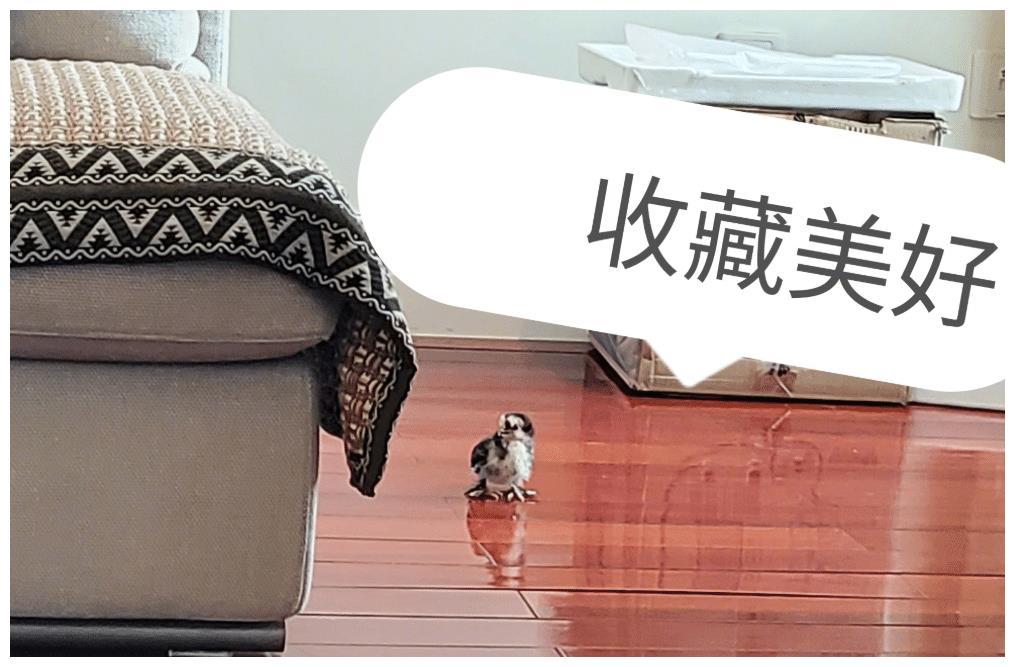 孙怡微博发文,表示自家宠物鸡被野猫叼走了,简直气愤至极