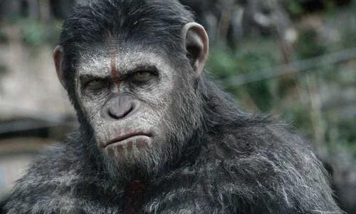 你认可进化论吗,为什么现在没有人猿进化成人了?