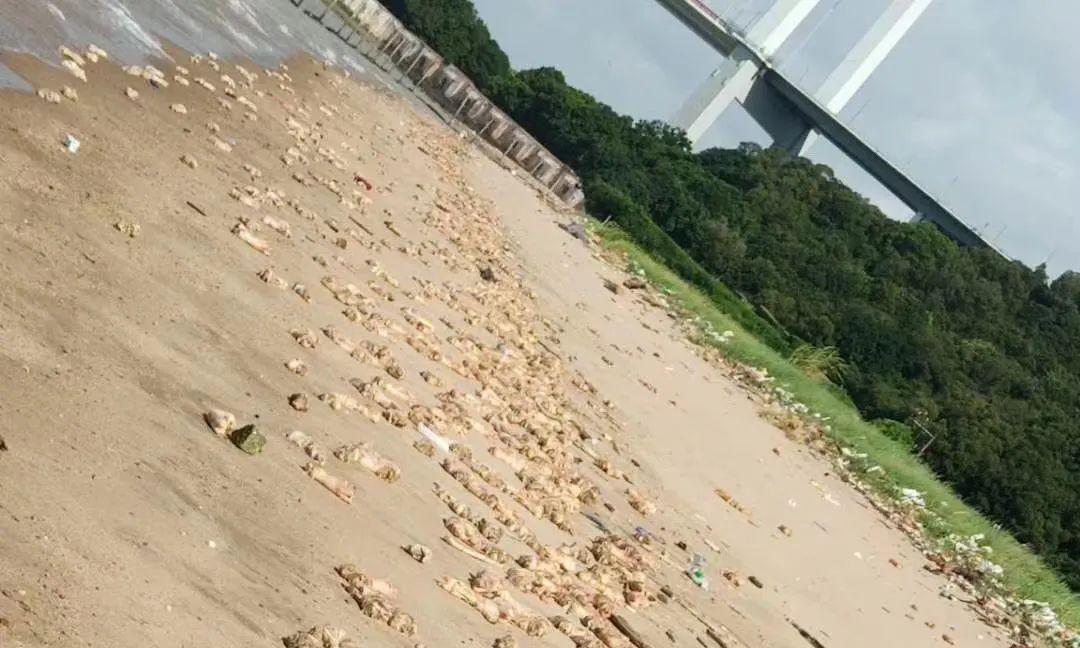 离奇!东莞海滩惊现上万只猪蹄,来源不明……