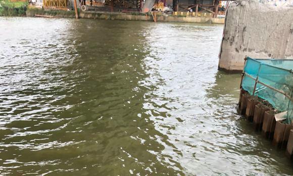 成群黑鱼聚集水边,苏州京杭大运河现罕见一幕,附近工人捞起一桶
