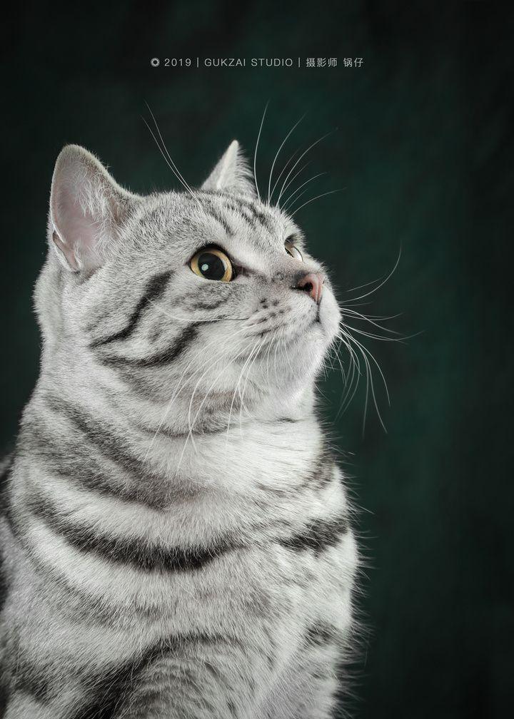爱拍猫的锅仔创作的《皮蛋写真集》