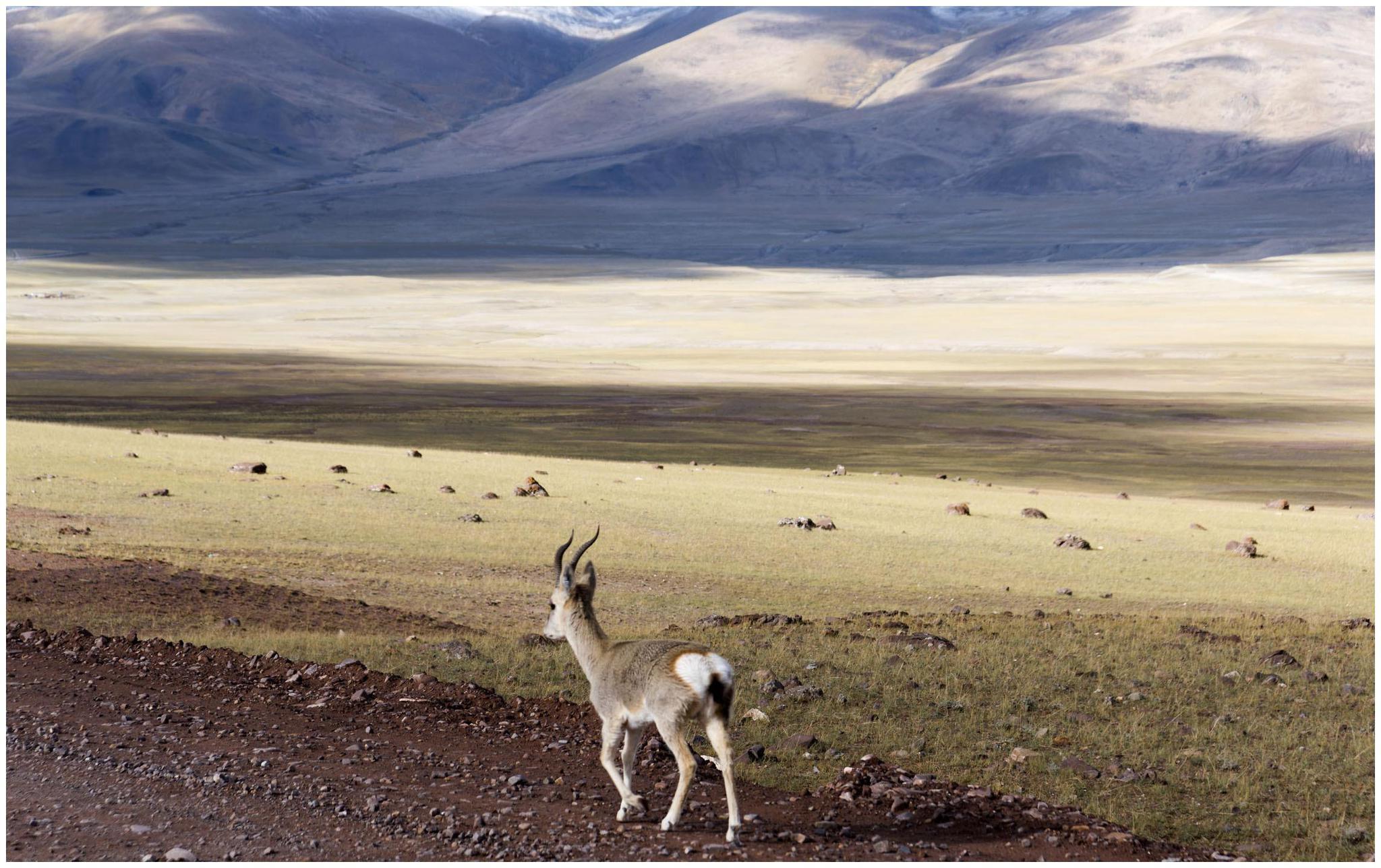 绍马里野生动物保护区,约旦最重要的濒危野生动物繁殖中心
