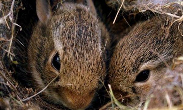 生肖兔的后半辈子该依靠谁?苦尽甘来,注定大富大贵!