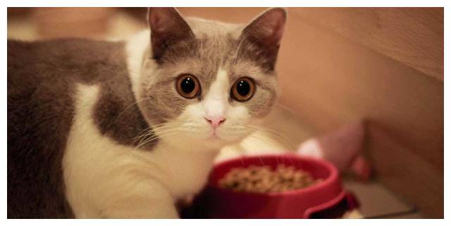 猫星人不听话?告诉你3个猫性的弱点,以后养猫就悠闲多了