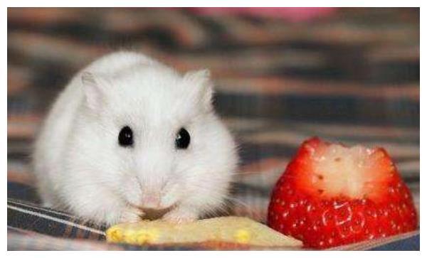"""生肖鼠:12月2记得留意""""这个人"""",他才是你未来2个月的小人!"""