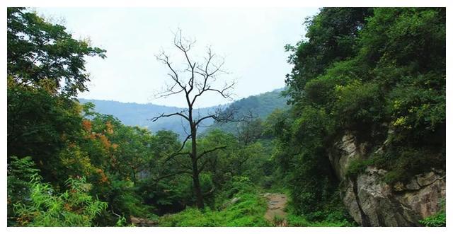 女子失联4天后在树杈上被发现,她经历了……|驴友|失联|树杈