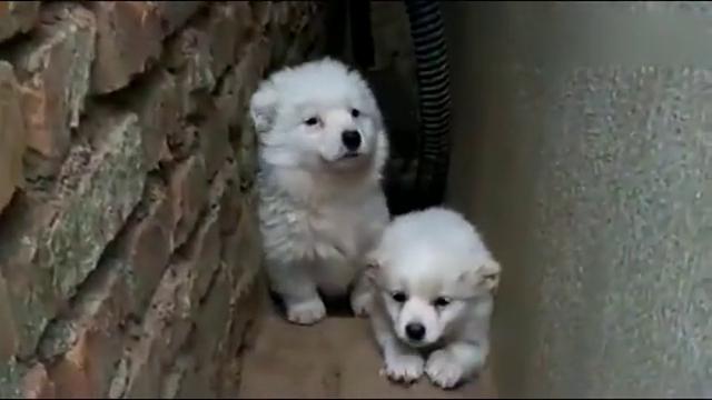 两只流浪小中华田园犬在夹缝中生存,这一刻真是太感人了