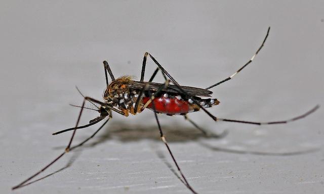 """可以彻底将蚊子消灭吗?对于生物圈来说,它是一代重任""""功臣"""""""