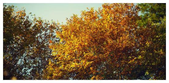 西安周边哪里的红叶最美?去黄柏塬看了一下,被美得晕乎好几天