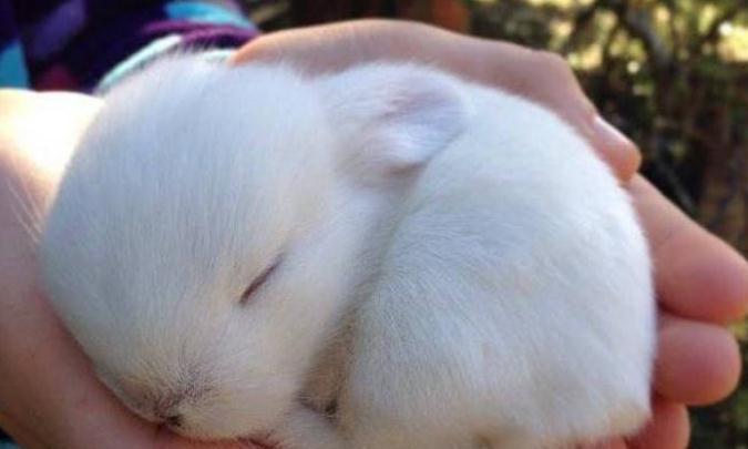 刚出生的小兔子,为什么兔妈妈会选择咬死它们?看完涨见识了