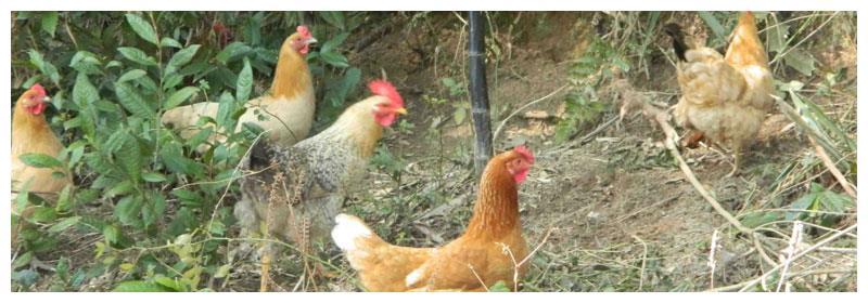 凡是未被列入畜禽遗传目录的陆生野生动物一律禁止食用